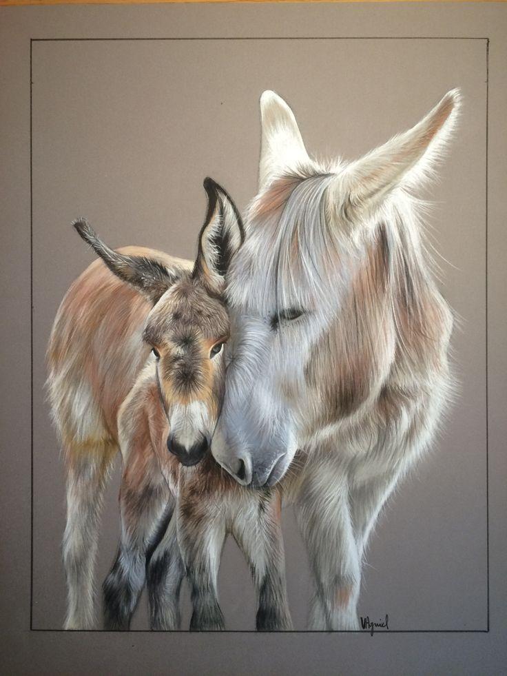 Portraits d'ânes, dessin au pastel