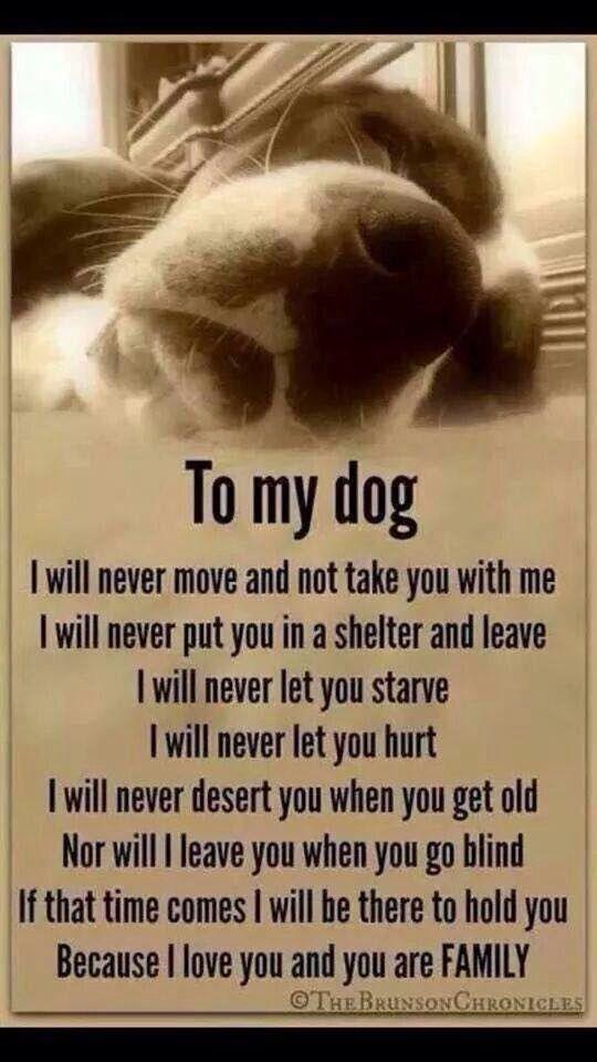 Pledge to my dog