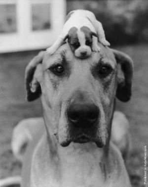 BIG AND LITTLE #funny #dog #puppy ♥g♥