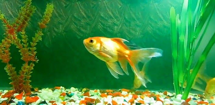 Fish Live Wallpaper For Windows Xp Free Download With Images