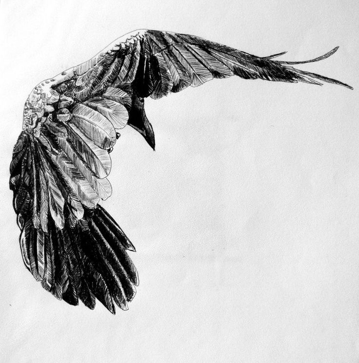 Pics For > Ravens Flying Drawing