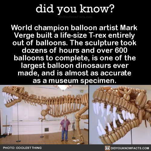World champion balloon artist Mark Verge built a life-size T-rex entirely out of balloons. The sculpture took dozens of hours and over 600 balloons to complete, is one of the largest balloon dinosaurs ever made, and is almost as accurate as a museum...