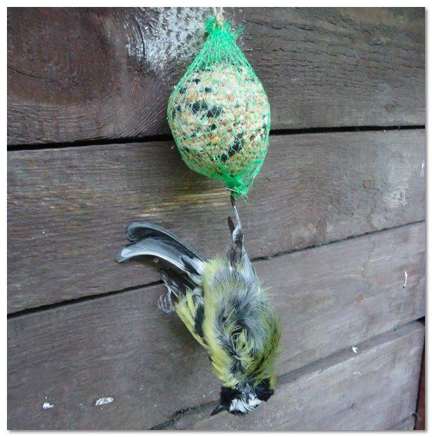 Speel op veilig. Voer vetbollen en pindanoten in gepaste houders en voedersilo's. Vogels raken soms verstrikt in plastiek netjes.