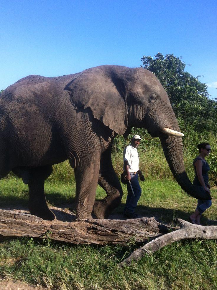 Walking with elephants - Hoedspruit, South Africa