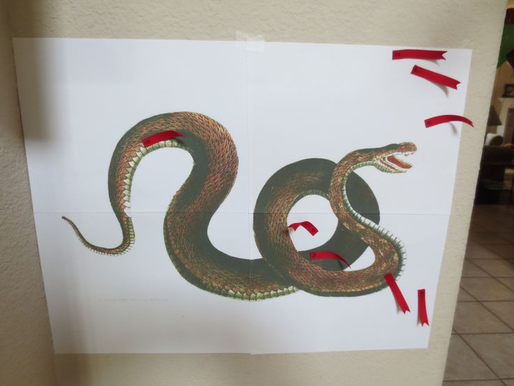 Pin the Tongue on the Snake Game - Snake Party Game! I'm linking to the site where I found the snake to print - I just changed the print settings to poster so it would print on 4 sheets of paper. I also removed the tongue in photoshop before printing. tongues are made with ribbon and have double sided tape on the back. FUN!