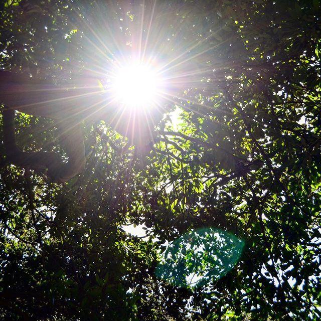 【matnob2】さんのInstagramをピンしています。 《#横須賀 #浦賀 #東叶神社 #裏山 #太陽光 #太陽 #木漏れ日 #ニコン #D5100 #森 #landscape #scenery #tv_landscapes #loves_landscape #tv_illuminate #instagood #sun #sunshine #nature #japan》