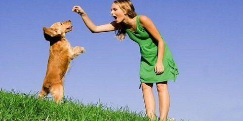 Tips cara melatih anjing berdiri http://www.anjinglovers.com/cara-melatih-anjing-berdiri/ #anjing #anjinglovers #anjinglover #dog #doglover #pet #petlover #caramelatihanjingberdiri #caramelatihanjing #animal #pelatihananjing