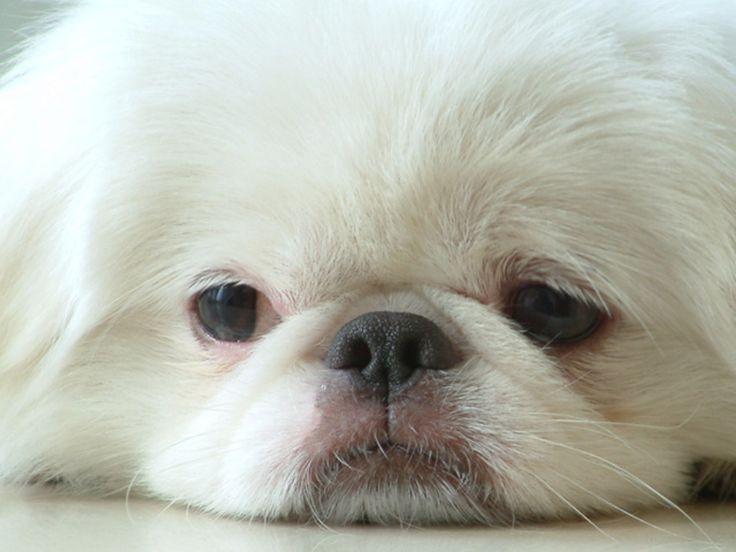 Darling little furry face.
