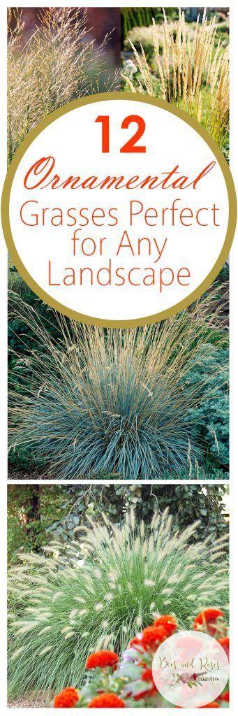 31 best Ornamental Grasses images on Pinterest Garden Flower