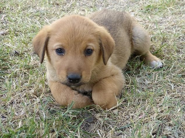 When to Start Puppy Obedience Training
