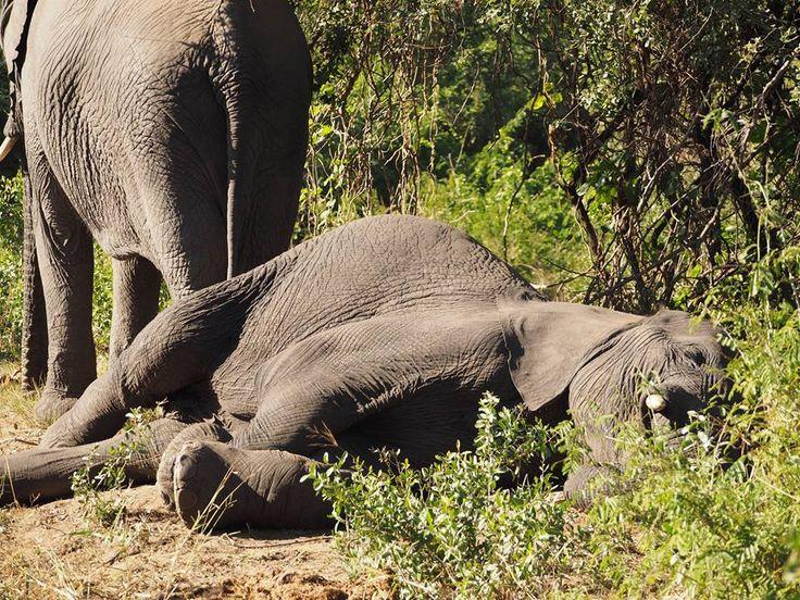 Weekend feels  #elephant #itstheweekendbaby #tgif