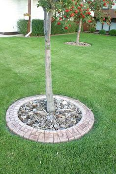 Stone edging around trees. **Just had this  the sidewalk edging done, I can't believe how different it makes the house look!**