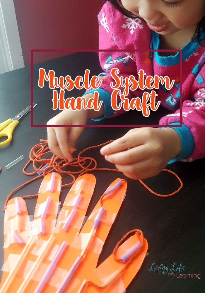 Learn all about the muscle system with this muscle system hand craft for kids. Make science come alive by seeing how the hand works as it moves. They will absolutely love making this Muscle System hand craft for kids!