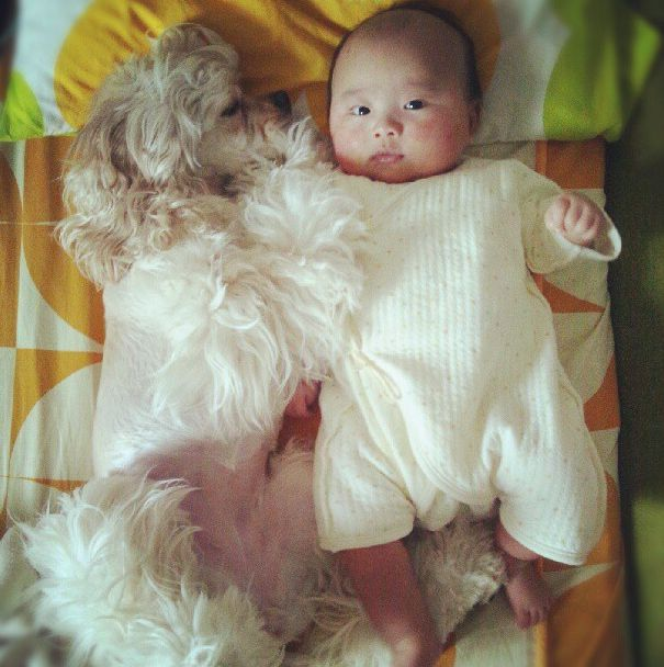 Truly Adorable Pictures Of A Baby And A Cocker Spaniel That Are BFFs --- found on buzzfeed