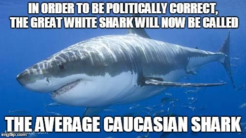 great white average shark   IN ORDER TO BE POLITICALLY CORRECT, THE GREAT WHITE SHARK WILL NOW BE CALLED THE AVERAGE CAUCASIAN SHARK   image tagged in great,white,shark,average,caucasian,politically correct   made w/ Imgflip meme maker