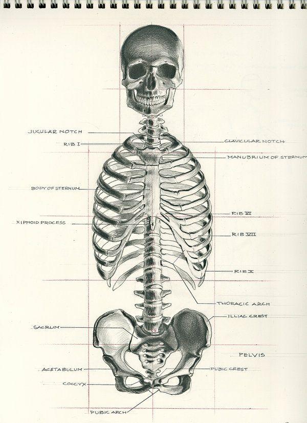 human body | Description, Anatomy, & Facts | Britannica.com
