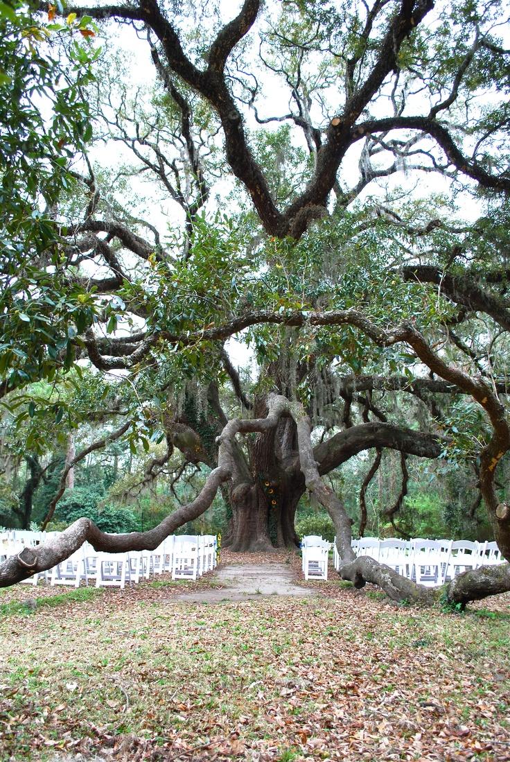 Our Wedding Location, Lichgate Park, Tallahassee, FL. My