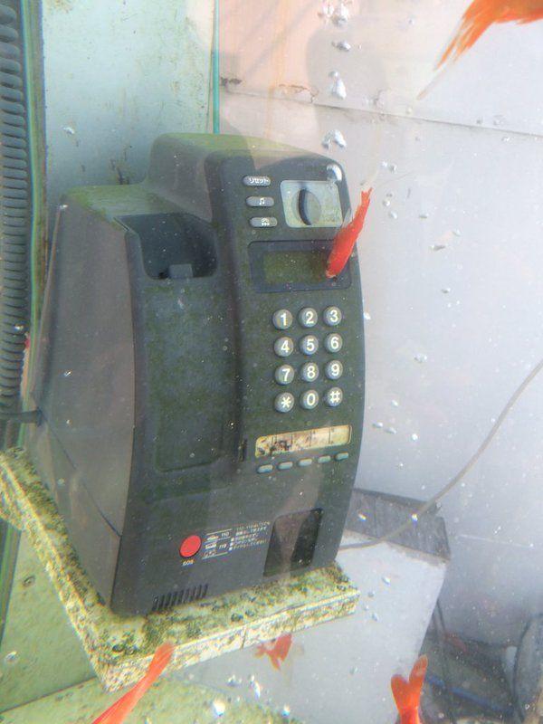 電話ボックス金魚2
