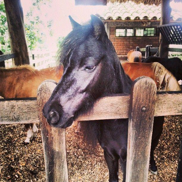 En PANACA puedes alimentar a los ponys, burros, mulas cebrallos, y al caballo miniatura.