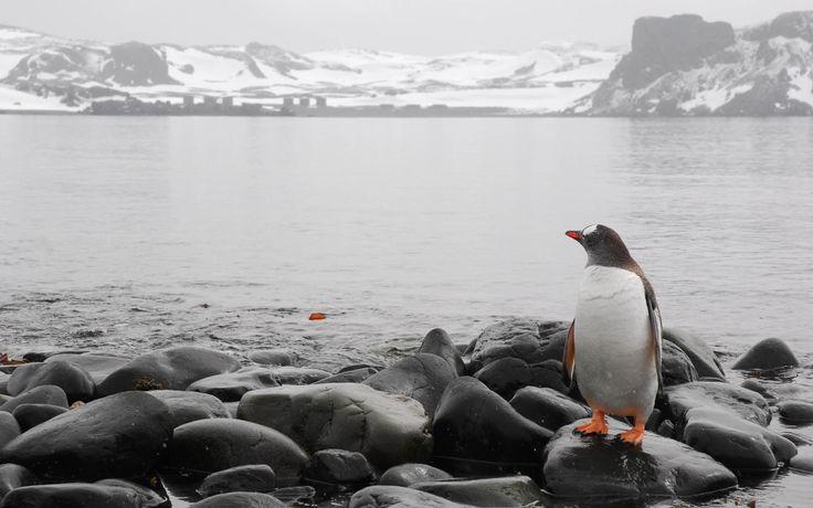 Fond d'écran hd : antarctique