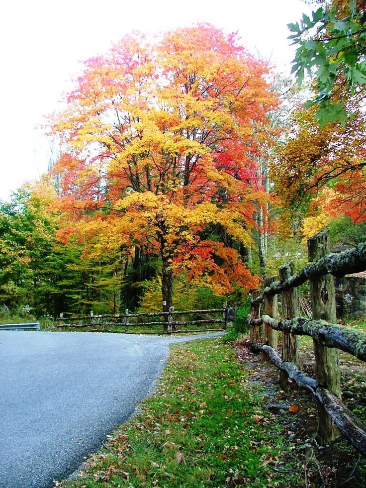 Fall in Roan Mountain TN...Heaton Creek Rd.  2011