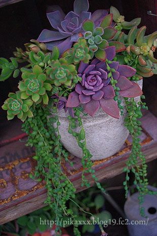 love the purple and green together