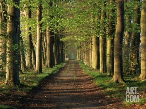 Tree-Lined Path Photographic Print by Dave Bartruff at Art.com