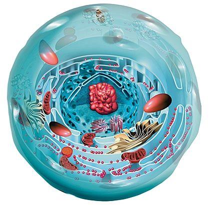 La cellule, preuve d'une conception intelligente pour les scientifiques - Oumzaza.fr