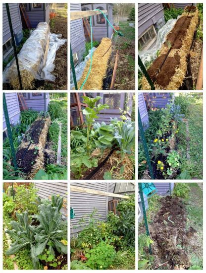 83 Best Images About Strawbale Gardening On Pinterest Gardens Raised Beds And Conditioning