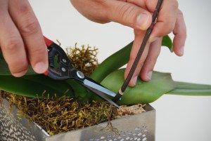 5 dicas secretas para fazer suas orquídeas florir todo ano.