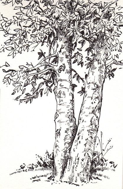 by Lori Mitchell. Okay, trees are great to draw. What don't I like to draw...boreing stuff I guess.
