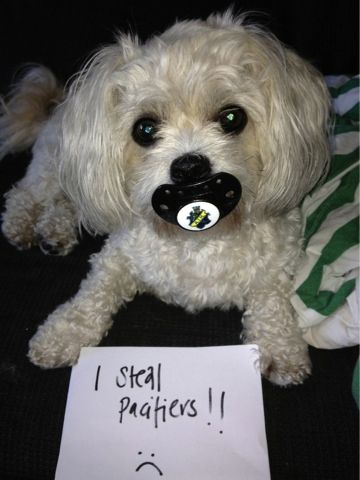 In a woman's mind is a dangerous place...: Dog Shaming is Hilarious