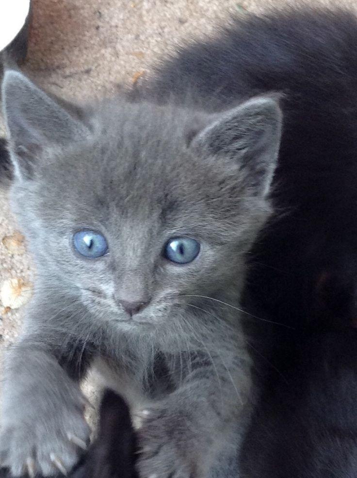 Kittens 2014