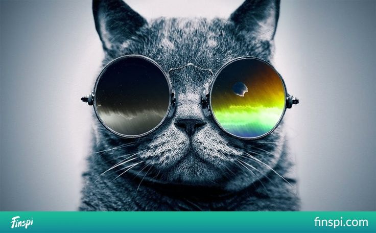 cool cat #kot #okulary #photo