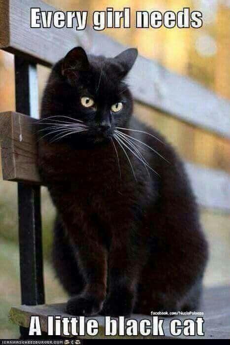 My first kitty was black...miss my Gizmo!
