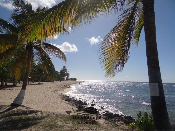 """Beach """"La Chapelle"""" in Guadeloupe islands."""
