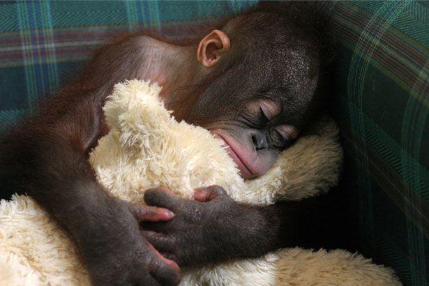 A look inside the orangutan orphanage - Cute - Stylist Magazine