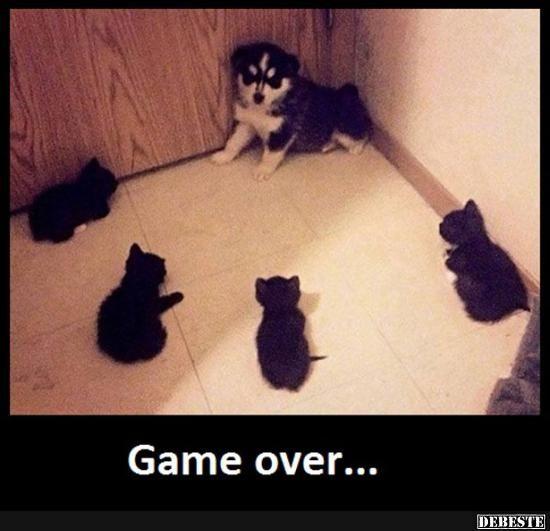 Game over... | Lustige Bilder, Sprüche, Witze, echt lustig