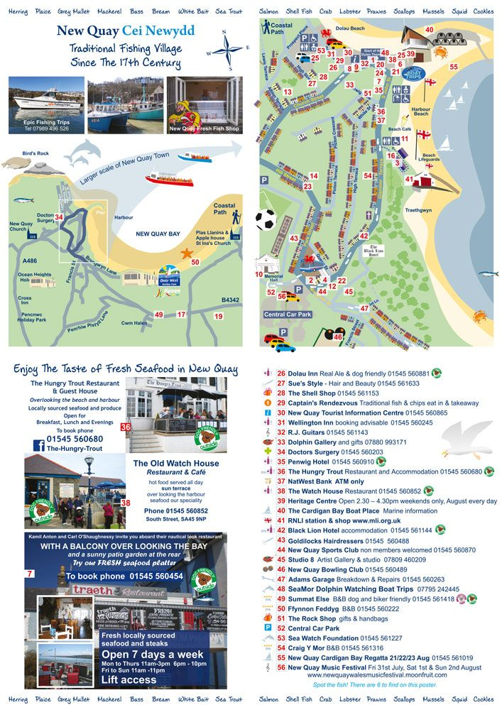 New Quay, Wales map, showing places of interest and local businesses. Illustration and design by Logopro.