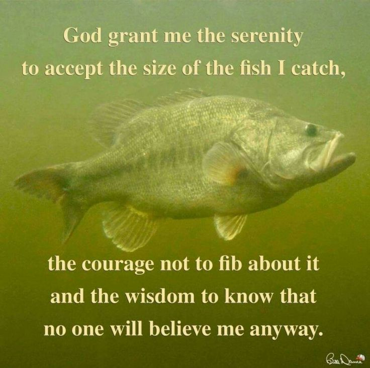 2129 best bass fishing images on pinterest fishing for Funny fishing quotes