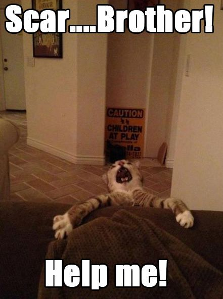 ha!: Help Me, Real Life, Funny Pictures, Funny Cat, Funny Stuff, Lion King, Cat Faces, Cat Meme, So Funny