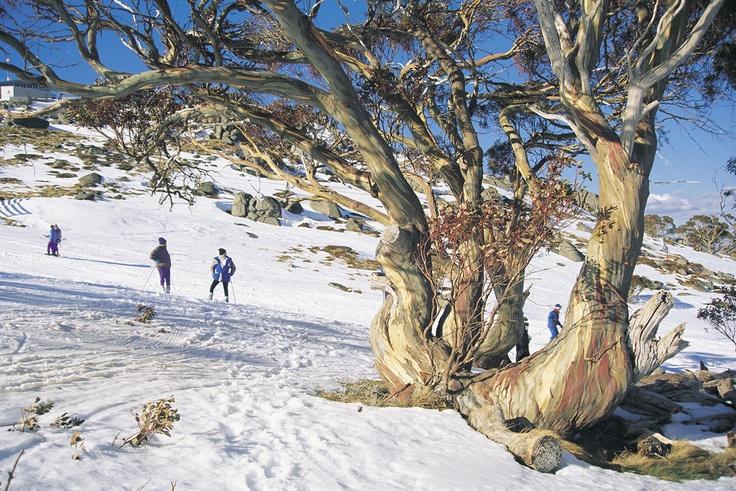 Thredbo, Snowy Mountains, Australia