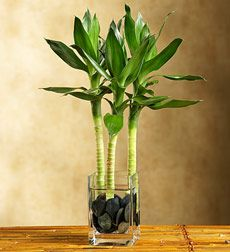 poradca Feng shui: kvety