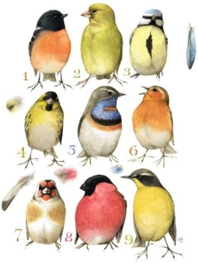birds - Marjolein Bastin