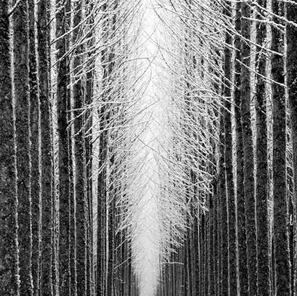 Jeffrey ConleyLights, Artists, Conley Photography, Winter Trees, Winter Photography, Photography Pics, Trees Cathedral, Beautiful Photography, Cathedral Jeffrey Conley