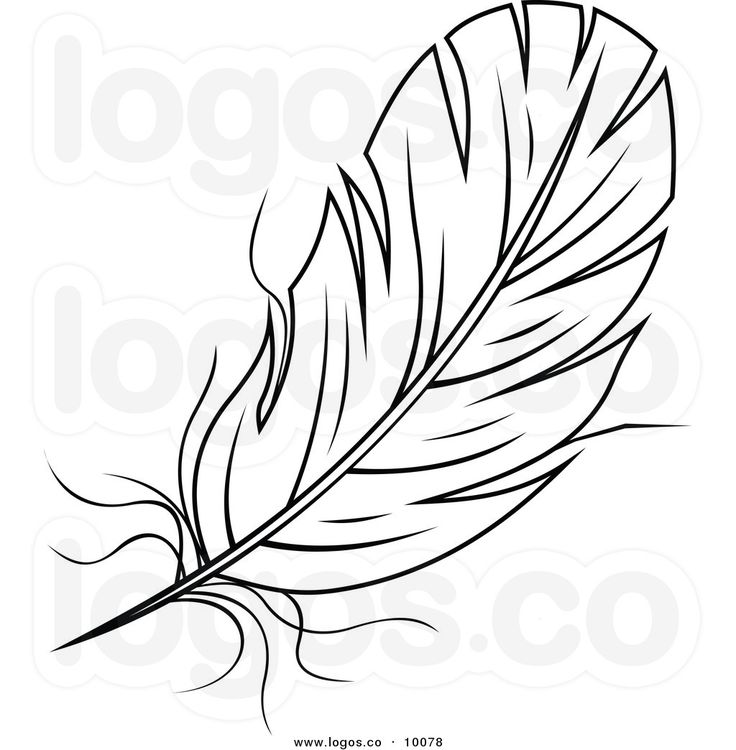 17 Best images about Feathers on Pinterest | Bird feathers, Clip ...