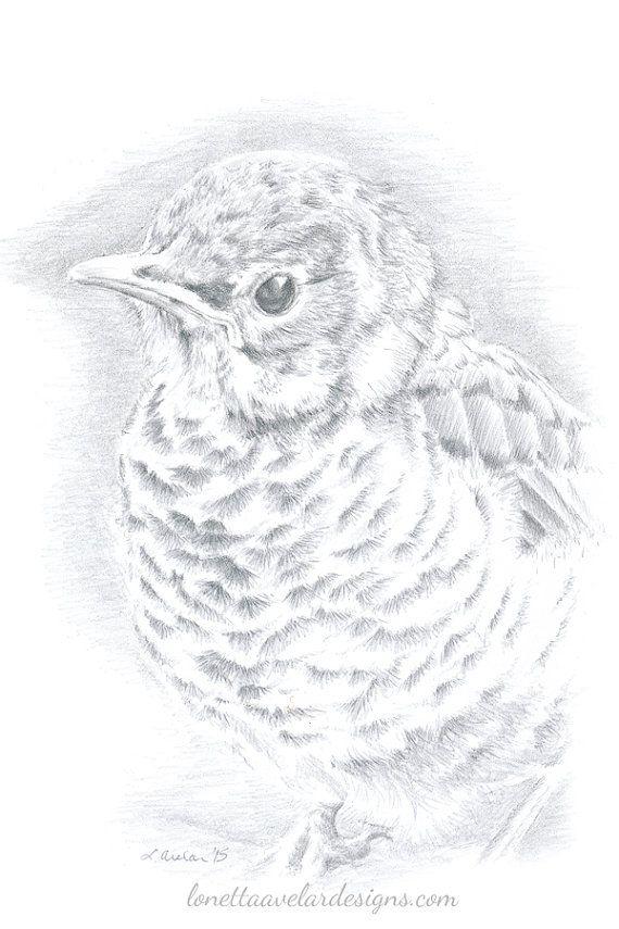 Silverpoint Drawing Robin Drawing Unframed by LonettaAvelarDesigns