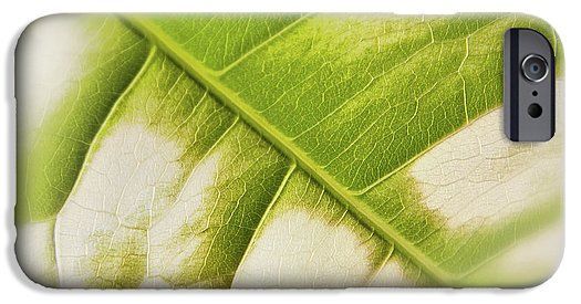 Partly Faded Leaf Soft IPhone 6s Case for Sale by Sverre Andreas Fekjan.  Protect your iPhone 6s with an impact-resistant, slim-profile,…