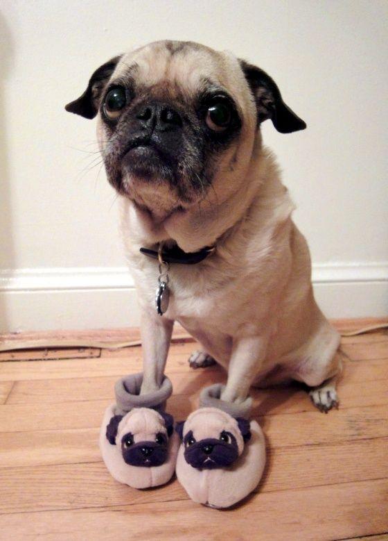 pug slippers cute
