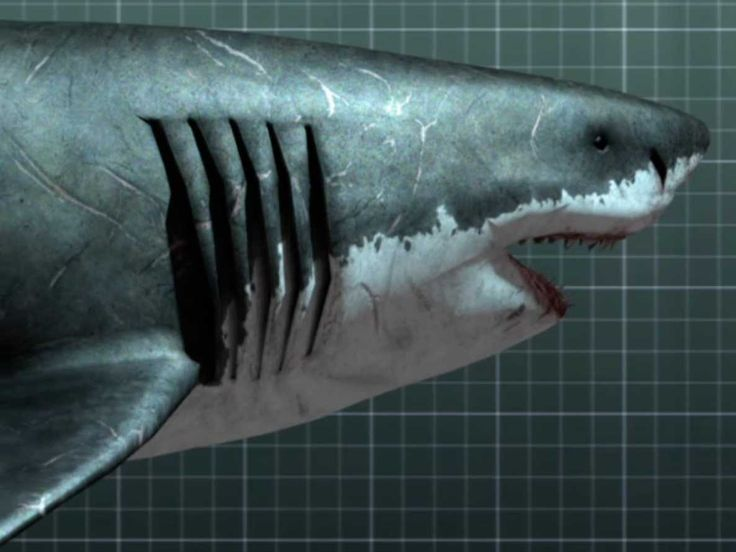 25 best ideas about megalodon documentary on pinterest